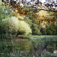 webphoto-19-2