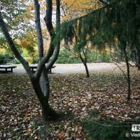 webphoto-44-2