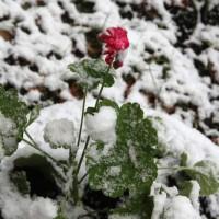 опервый снег 202
