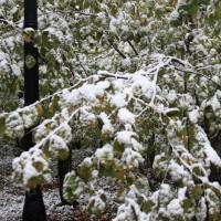 опервый снег 258