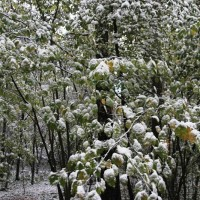 опервый снег 277