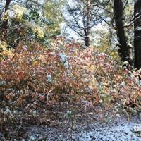 опервый снег 360