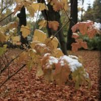 опервый снег 536