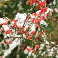 опервый снег 810