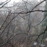 webphoto-11