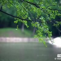 webphoto-94