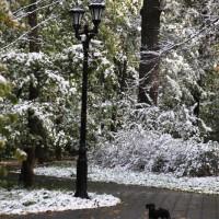 опервый снег 231
