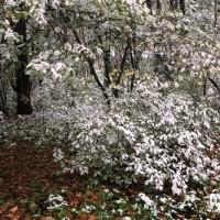опервый снег 278