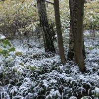 опервый снег 602