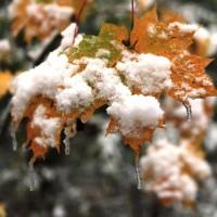 опервый снег 768